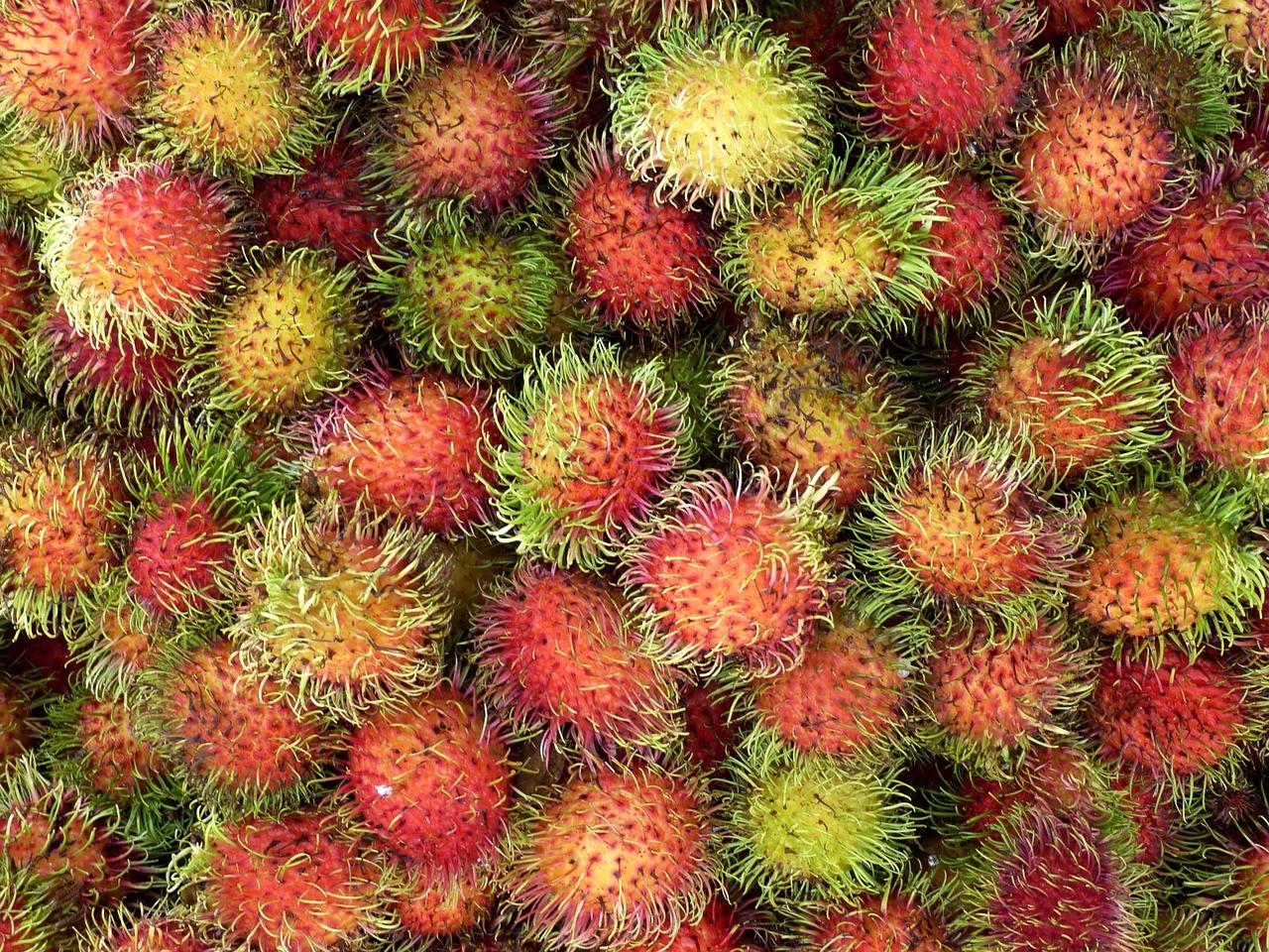 Rambutan – Exotisch und Einzigartig